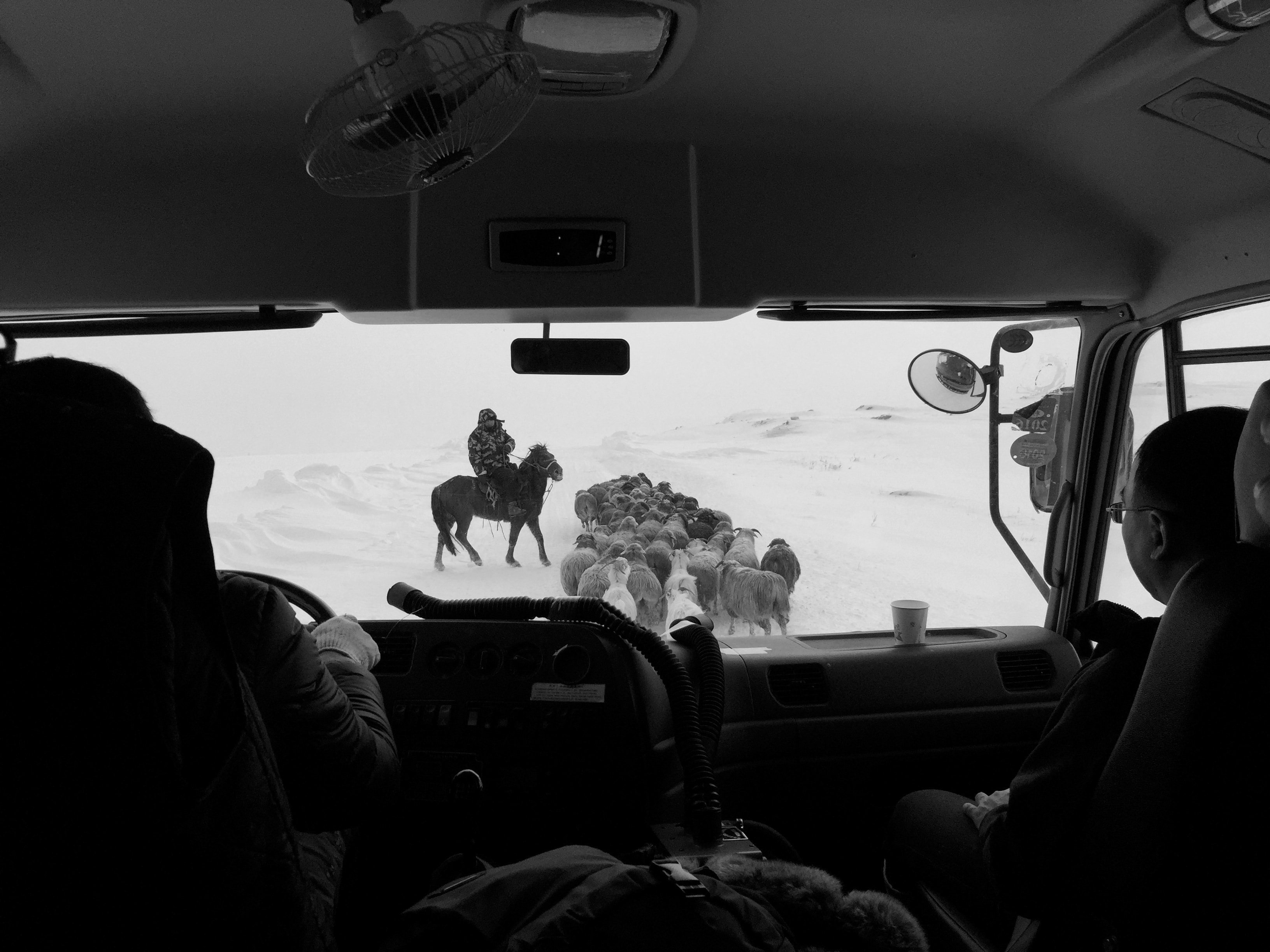 Johan Wildhagen – When the road ends – horses from the archive